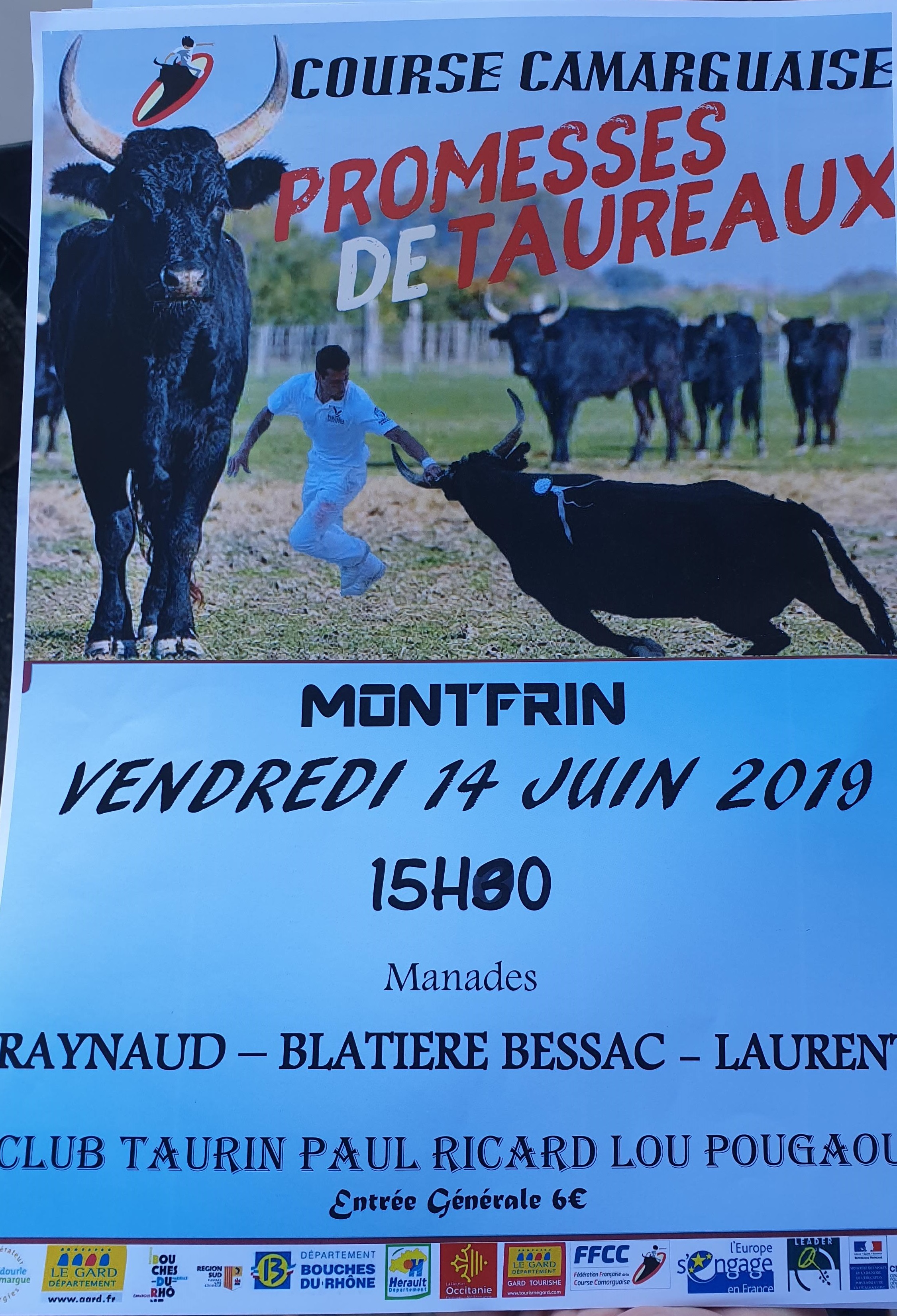 Taureaux jeunes en promotion 2019 Montfrin