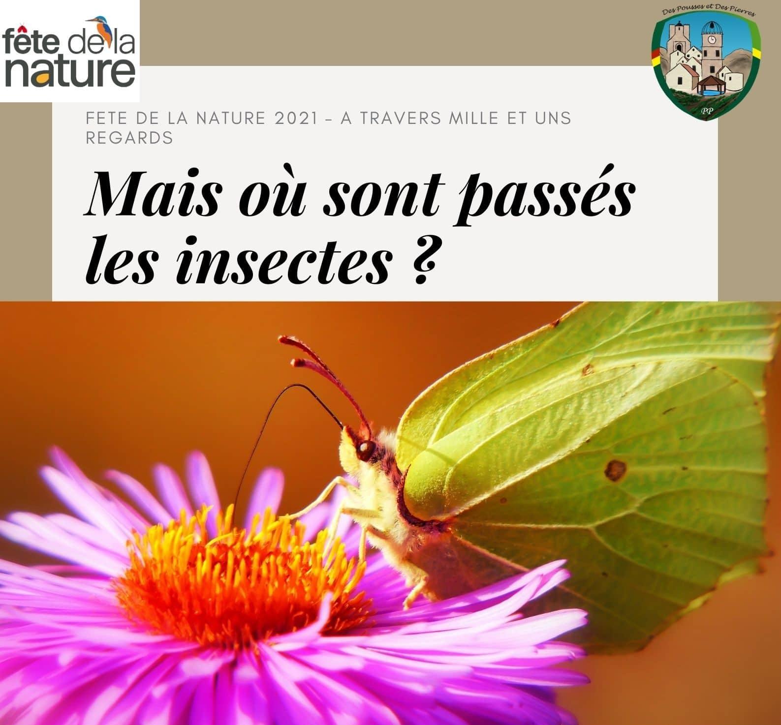 FETE DE LA NATURE 2021 - A travers mille et un regards : Mais où sont passés les insectes ?